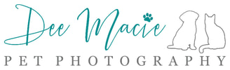 Dog and Pet Photography Nottingham